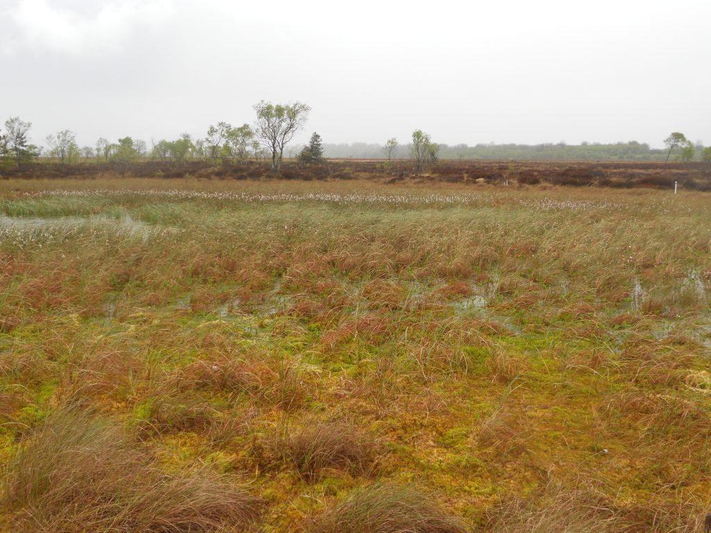 Bog Lands at Clara Bog