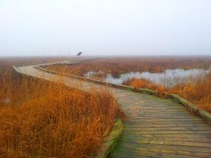 Boardwalk on a November Morning