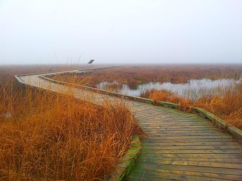 Boardwalk / Walkway on a November Morning