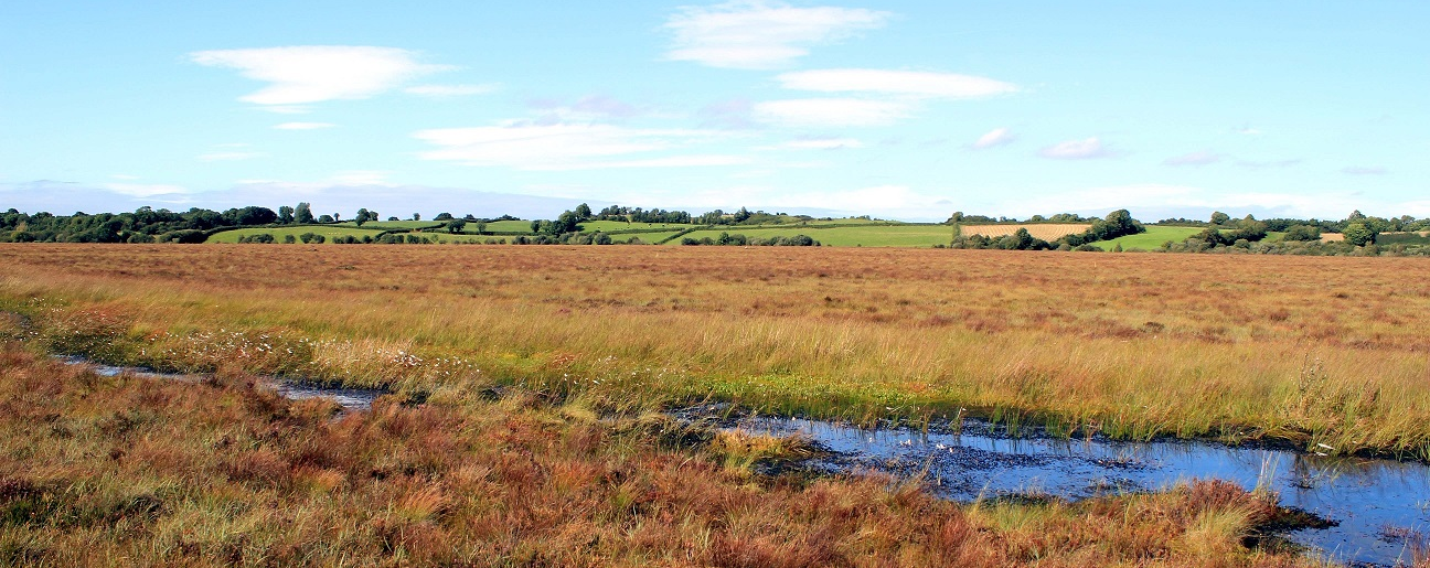 Welcome to Clara Bog Nature Reserve